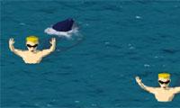 Sharks Vs Swimmers